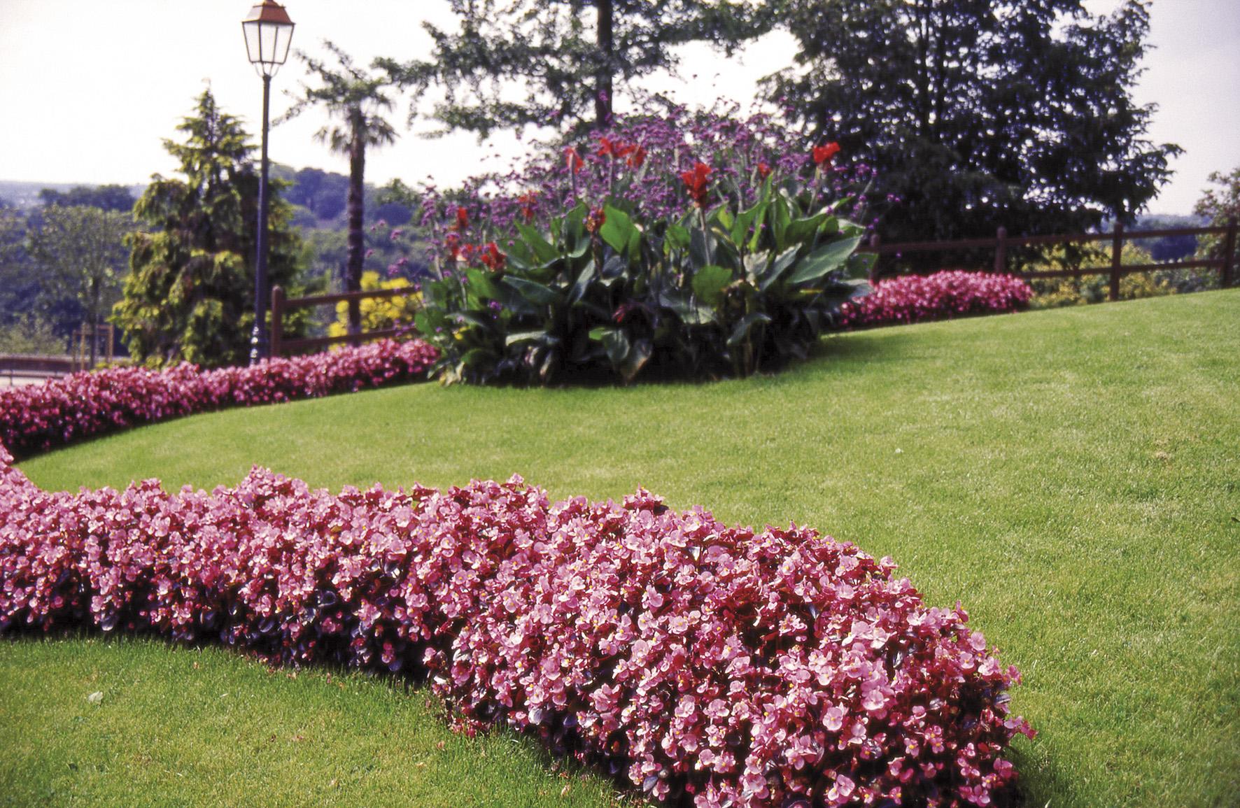 les plantes massif barbaux fleurs. Black Bedroom Furniture Sets. Home Design Ideas