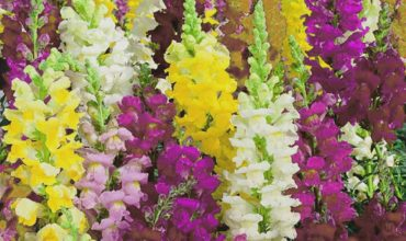 Les plantes massif - Massif de fleurs plein soleil ...
