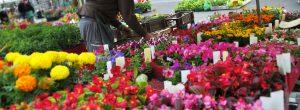 marché foire entreprise barbaux fleurs