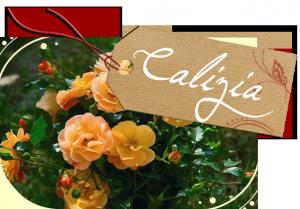 rose calizia